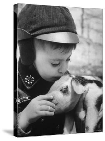 Little Boy Playing with Piglet on Farm in Kansas-Francis Miller-Stretched Canvas Print