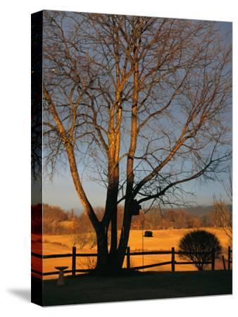 Cherry Tree in Waynesboro, Pennsylvania-Raymond Gehman-Stretched Canvas Print