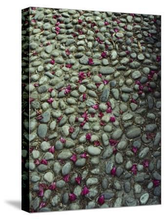 Flower-Strewn Cobblestones-Sam Abell-Stretched Canvas Print