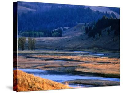 Lamar River Valley with Bison Crossing in Distance, Yellowstone National Park, U.S.A.-Christer Fredriksson-Stretched Canvas Print