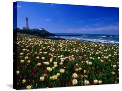 Pigeon Point Lighthouse of San Mateo County, with Wildflowers in Foreground, Sacramento, USA-Brent Winebrenner-Stretched Canvas Print