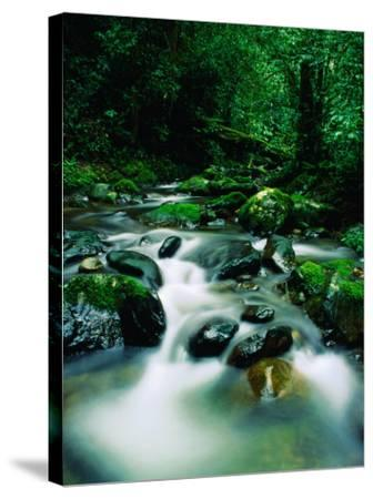 Liwagu River at Kinabalu National Park, Sabah, Malaysia-Mark Daffey-Stretched Canvas Print