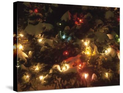 Christmas Lights on Snowy Evergreen Branches--Stretched Canvas Print
