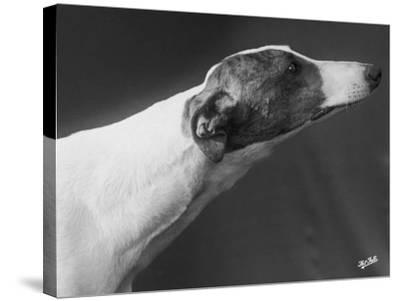 Springtime Owned by Carpenter-Thomas Fall-Stretched Canvas Print