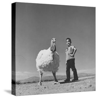 60 lb. Hybrid Turkey with 35 lb. Donny Bigfeather-Ralph Crane-Stretched Canvas Print