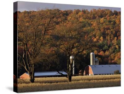 Fall Colors and a Field of Dried Soybeans in Pleasant Gap, Pennsylvania, October 20, 2006-Carolyn Kaster-Stretched Canvas Print