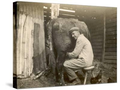Farmworker Milks a Cow by Hand in a Very Primitive Cow- House--Stretched Canvas Print