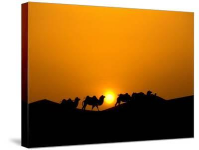 Camel Caravan Silhouette at Dawn, Silk Road, China-Keren Su-Stretched Canvas Print