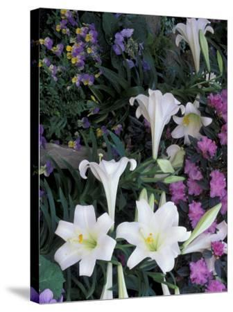 Hydrangea, Violas, Easter Lily's, Cincinatti, Ohio, USA-Adam Jones-Stretched Canvas Print