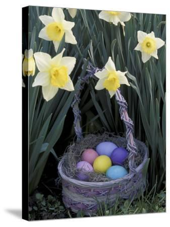 Easter Basket Among Daffodils, Louisville, Kentucky, USA-Adam Jones-Stretched Canvas Print