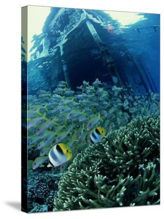 Reef Panorama Under Pier, French Polynesia-Tobias Bernhard-Stretched Canvas Print