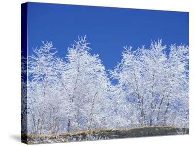 Snow-Covered Trees and Sky, Great Smoky Mountains National Park, Tennessee, USA-Adam Jones-Stretched Canvas Print