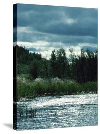 Serene Lake and Forest--Stretched Canvas Print