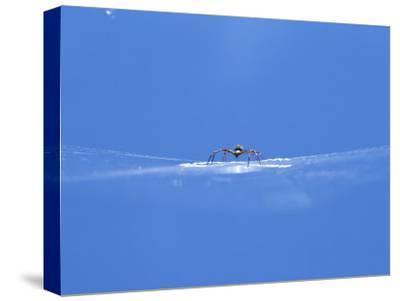 A Spider Perched on Its Web-John Dunn/Arctic Light-Stretched Canvas Print