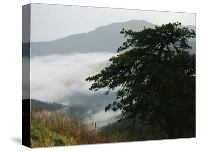 Fog in Valley Below Old Rag Mountain-Raymond Gehman-Stretched Canvas Print