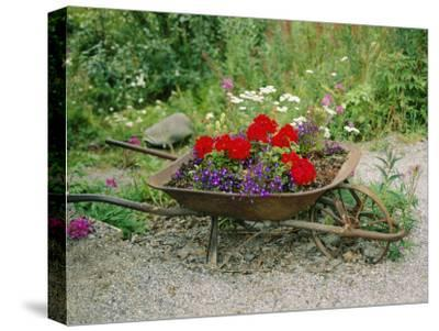 View of an Old Wheelbarrow Used for Summer Flowers-George F^ Mobley-Stretched Canvas Print