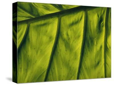 Close View of a Leaf--Stretched Canvas Print