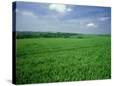 Wheat Field in Summer-Mike England-Stretched Canvas Print