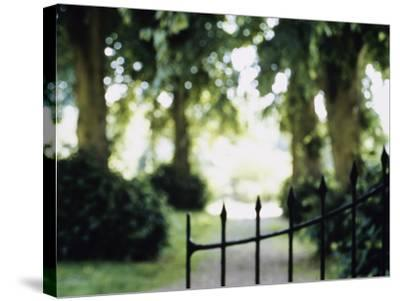 Blurred Image of a Gate and Woodland Path--Stretched Canvas Print