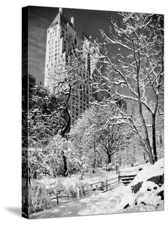 Snow-Covered Trees--Stretched Canvas Print
