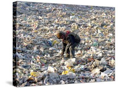 An Impoverished Mongolian Man Sorts Through Garbage at an Ulan Bator Dump--Stretched Canvas Print