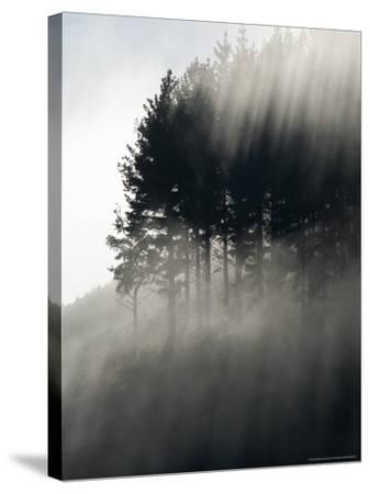 Early Morning Mist and Trees, State Highway 4 near Wanganui, North Island, New Zealand-David Wall-Stretched Canvas Print