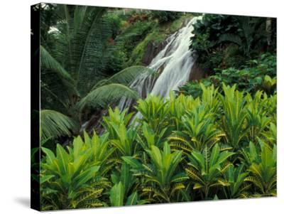 Shaw Park Gardens, Jamaica, Caribbean-Robin Hill-Stretched Canvas Print