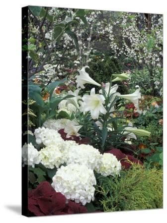 Easter Lilies and Hydrangea Flowers-Adam Jones-Stretched Canvas Print