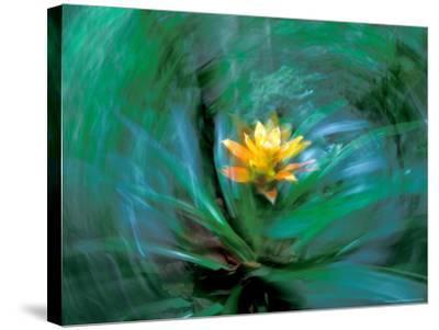 Epiphyte, Barro Colorado Island, Panama-Christian Ziegler-Stretched Canvas Print