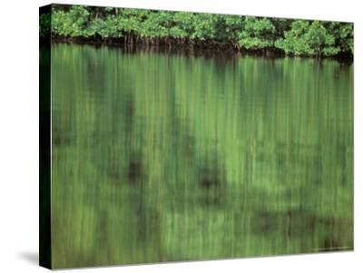 Mangrove, 10,000 Islands, Everglades, Florida, USA-Connie Bransilver-Stretched Canvas Print