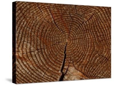 Close-up of the Rings and Cracks of Texture on a Cut Log--Stretched Canvas Print
