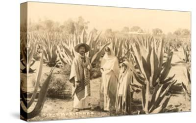 Natives on Maguey Plantation, Mexico--Stretched Canvas Print