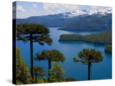 Araucaria Trees Above Lago Conguillio-Bethune Carmichael-Stretched Canvas Print