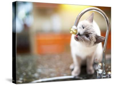Cat Sitting on Counter and Licking Drops of Water from Kitchen Faucet--Stretched Canvas Print