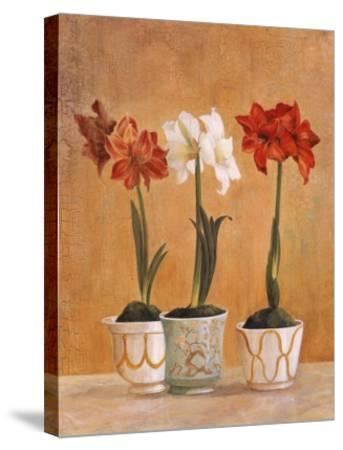 Amaryllis in Pots-Hampton Hall-Stretched Canvas Print