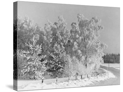Snow Covering Countryside Northeast of Lake Ladoga-Carl Mydans-Stretched Canvas Print