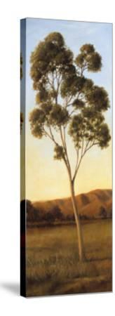 Lonely Eucalyptus I-Cory Steffen-Stretched Canvas Print
