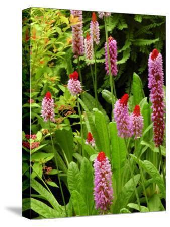 Flowers in Garden, Victoria, British Columbia, Canada-Darlyne A^ Murawski-Stretched Canvas Print