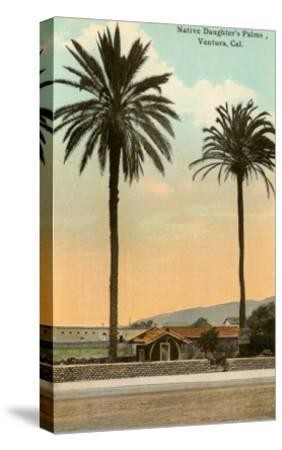 Palm Trees, Ventura--Stretched Canvas Print