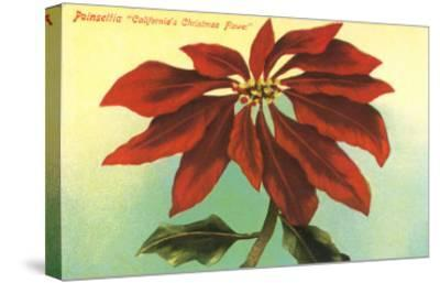 California Christmas, Poinsettia--Stretched Canvas Print