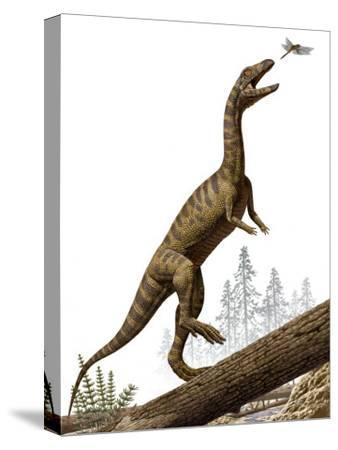 A Triassic reptile, Effigia okeeffeae, resembling a dinosaur-Raul Martin-Stretched Canvas Print