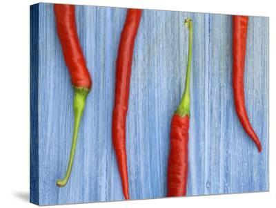 Red Chilli Peppers Chillies Freshly Harvested on Pale Blue Background-Gary Smith-Stretched Canvas Print