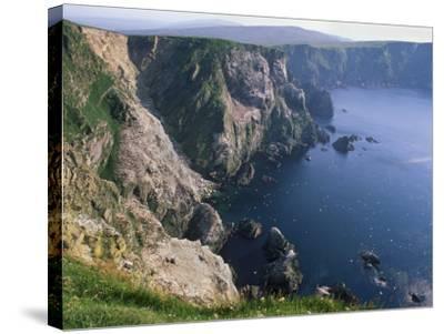 Cliffs of Hermaness National Nature Reserve, Unst, Shetland Islands, Scotland, UK-Patrick Dieudonne-Stretched Canvas Print