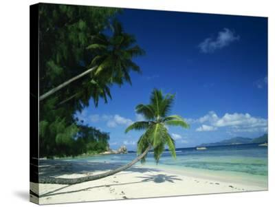 Leaning Palm Tree and Beach, Anse Severe, La Digue, Seychelles, Indian Ocean, Africa-Lee Frost-Stretched Canvas Print