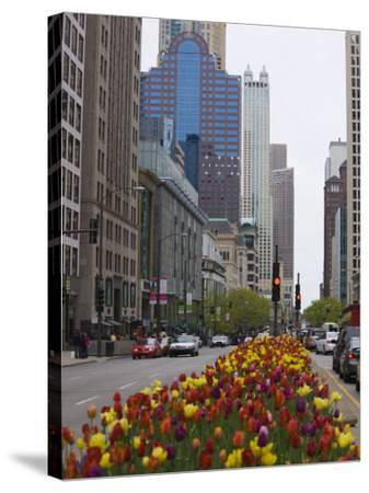 Spring Tulips on North Michigan Avenue, Chicago, Illinois, United States of America, North America-Amanda Hall-Stretched Canvas Print