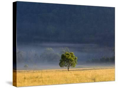 Gum Tree, Kosciuszko National Park, New South Wales, Australia, Pacific-Schlenker Jochen-Stretched Canvas Print