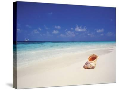 Shell on a Deserted Beach, Maldives, Indian Ocean-Papadopoulos Sakis-Stretched Canvas Print