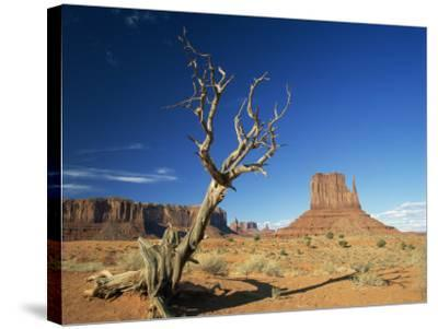 Desert Landscape with Rock Formations and Cliffs in the Background, Monument Valley, Arizona, USA--Stretched Canvas Print