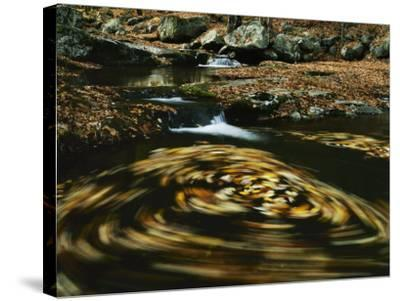 Leaves in whirlpool of Tye River near Blue Ridge Parkway, Appalachian Mountains, Virginia, USA-Charles Gurche-Stretched Canvas Print