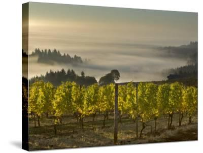 Fog Pools in Willamette Valley, Dundee, Oregon, USA-Janis Miglavs-Stretched Canvas Print